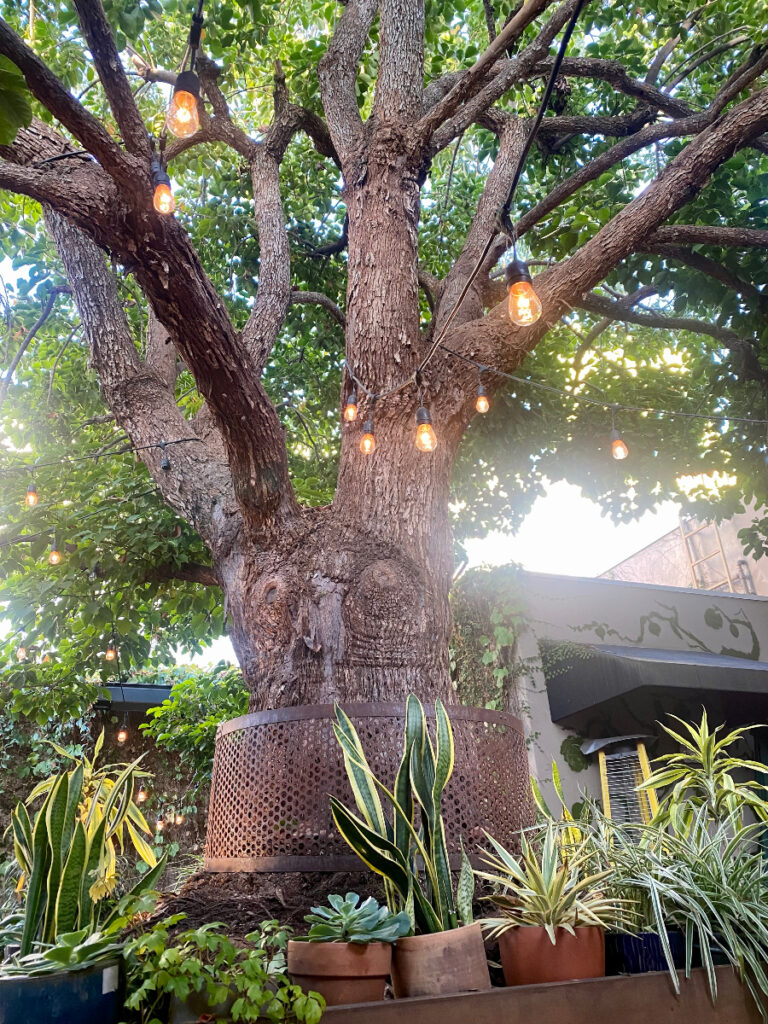 lush greenery at nic's on beverly outdoor patio, perfect for date night and vegan dining.